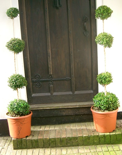 Buxus sempervirens Multi Ball Topiary Plants