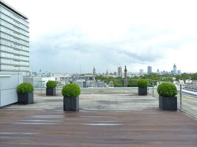 Buxus sempervirens balls 80cm diameter planted on a roof terrace